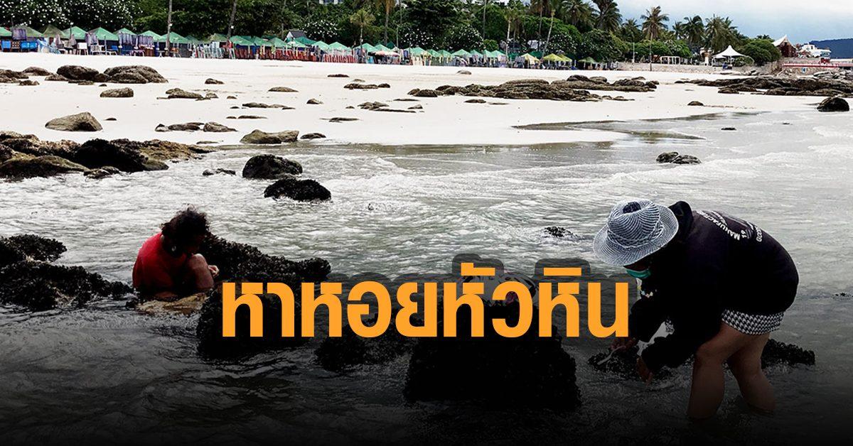 น้ำลง! ชาวบ้านแห่หาหอยหาดหัวหิน หาได้เสริมช่วงโควิด