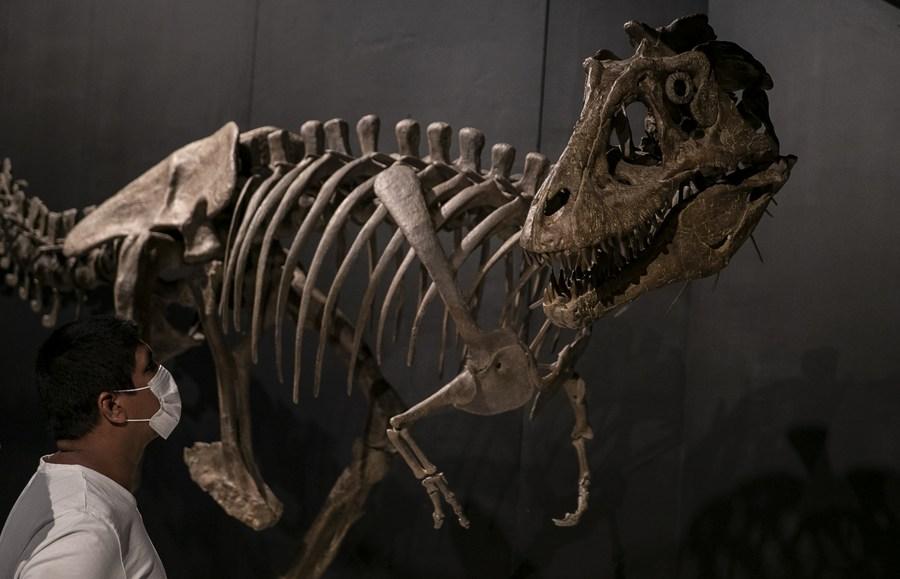 เที่ยวชม 'พิพิธภัณฑ์เก่าแก่ที่สุด' ของออสเตรเลีย