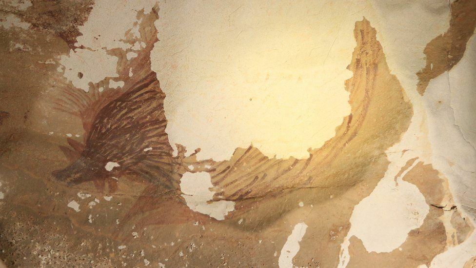 """รูปวาด """"หมูป่า"""" ผนังถ้ำอินโดนีเซียเริ่มจาง เกลือกัดกร่อน ผลพวงจากโลกร้อน"""