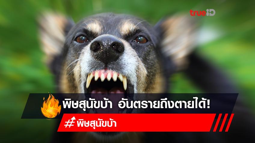"""หมากัด เสี่ยง """"โรคพิษสุนัขบ้า"""" เป็นแล้วเสียชีวิตทุกราย แต่ป้องกันได้ถ้ารู้ทัน"""