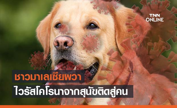 นักวิจัยพบไวรัสโคโรนาสายพันธุ์ใหม่ข้ามจากสุนัขไปติดมนุษย์