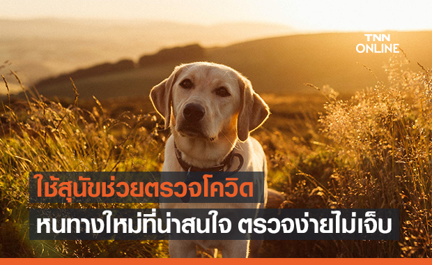 น้องหมาลาบราดอร์ร่วมสู้โคโรนาไวรัสในไทย ด้วยการช่วยดมกลิ่นหาเชื้อ!