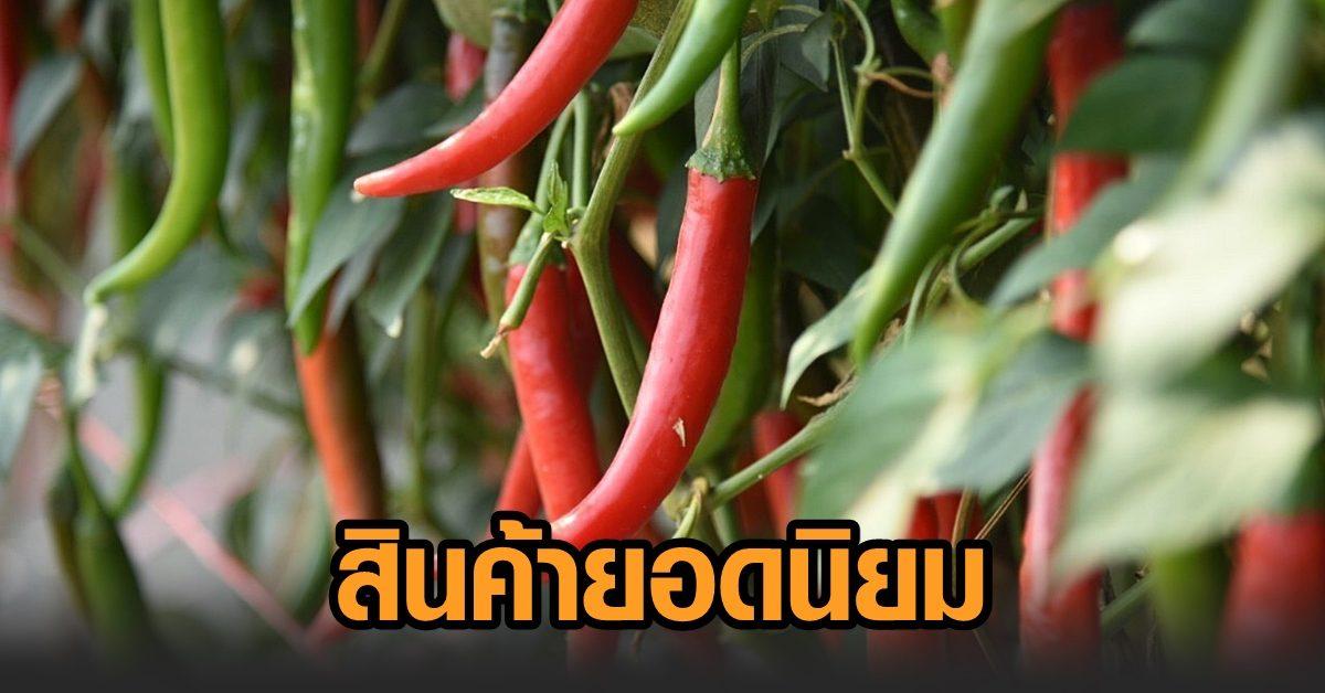 พณ.ปลื้ม เอฟทีเอหนุนส่งออกผักไทยไปจีน ไตรมาสแรกโตเกือบเท่าตัว 'พริก' สินค้ายอดฮิต