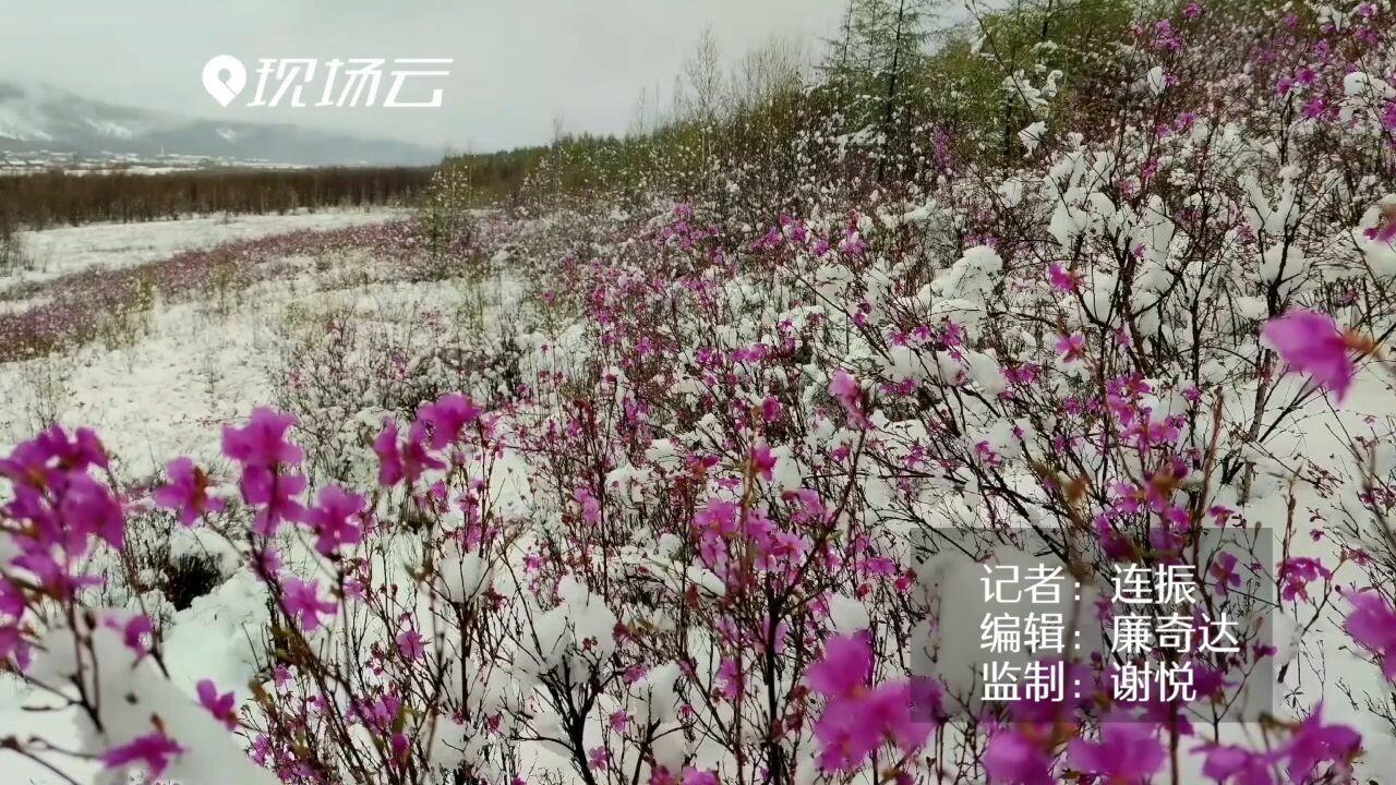 'หิมะฤดูร้อน' ห่มคลุมมองโกเลียใน ขาวโพลนละลานตา
