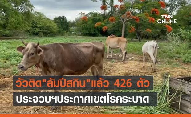 """ประจวบฯ ประกาศเขตโรคระบาด """"ลัมปีสกิน"""" หลังพบวัวป่วยแล้ว 426 ตัว"""