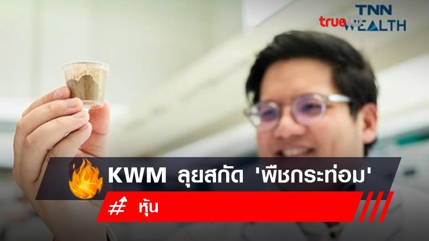 KWM ลุยสกัด 'พืชกระท่อม' หลังถูกปลดล็อกจากยาเสพติด กรุยทางยกระดับสมุนไพรไทยสู่สากล