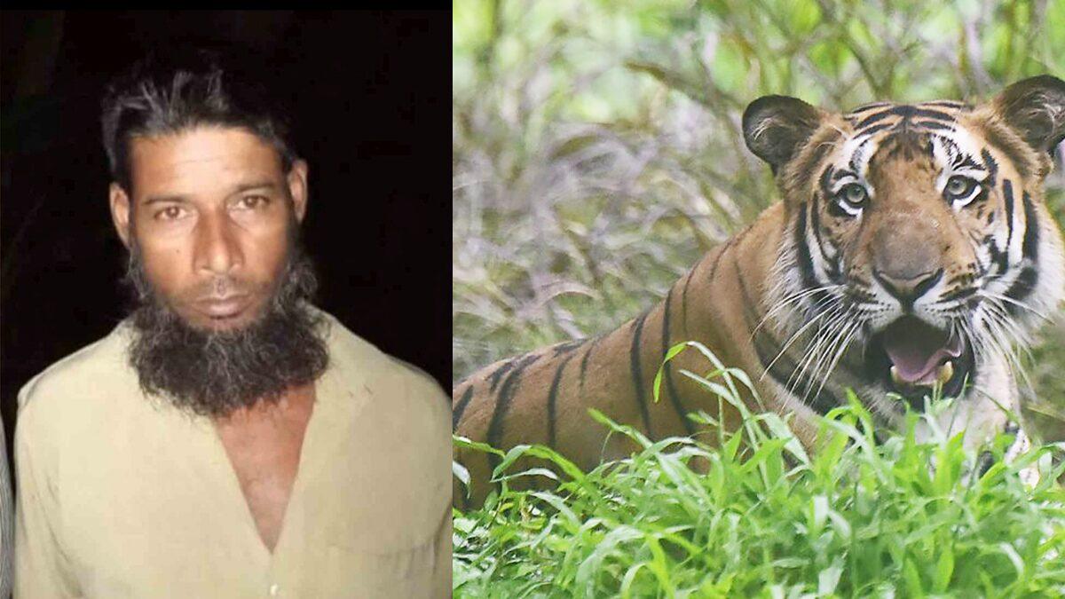 """ติดตามตัว 20 ปี บังกลาเทศจับได้แล้ว มือล่า """"เสือโคร่งเบงกอล"""" 70 ตัว"""