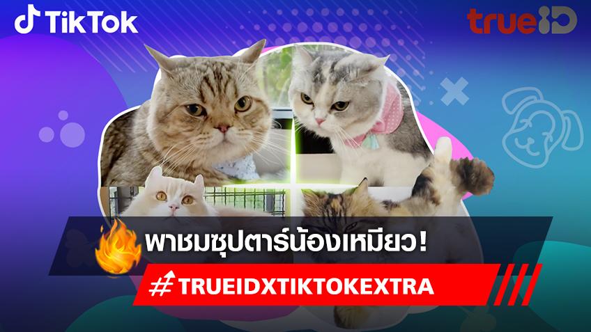 TrueID presents TikTok Extra : Pets EP3 รวมมิตรสัตว์เลี้ยงสุดน่ารักจาก TIKTOK