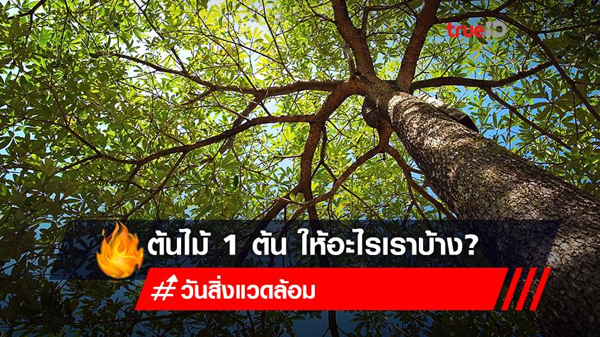 ต้นไม้ 1 ต้น ให้อะไรกับเราบ้างในวันสิ่งแวดล้อมโลก