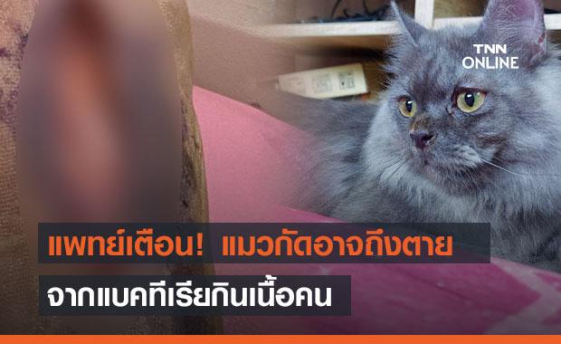 แพทย์ผิวหนังเตือน! แผลแมวกัดอาจถึงตาย จากแบคทีเรียกินเนื้อคน