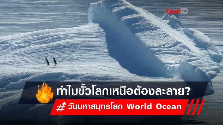 วันมหาสมุทรโลก World Ocean  : ร่างกายต้องการทะเล แต่ทำไมขั้วโลกเหนือต้องละลาย
