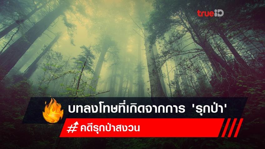 รวมคดี จากสองตายายเก็บเห็ด - คดีลุงพลรุกป่าสงวน บทลงโทษต้องรู้ไว้จะได้ไม่ทำผิด!