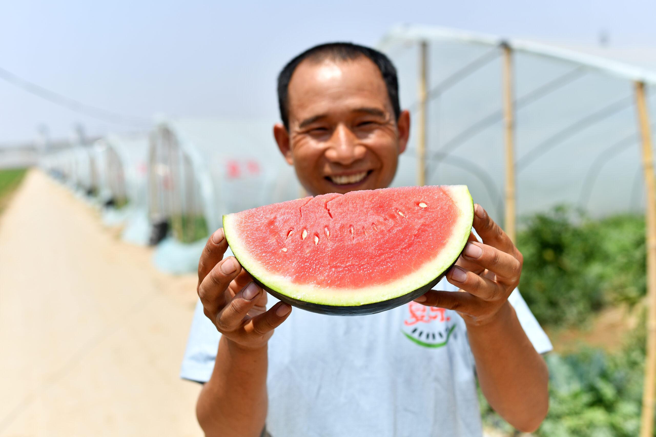 เกษตรกรจีนยิ้มรับ 'แตงโม' ลูกโตหวานฉ่ำ สร้างรายได้หลักหมื่น