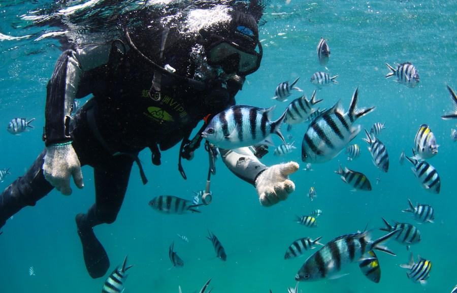 จีนฉลอง 'วันมหาสมุทรโลก' มุ่งคุ้มครองความหลากหลายทางชีวภาพ