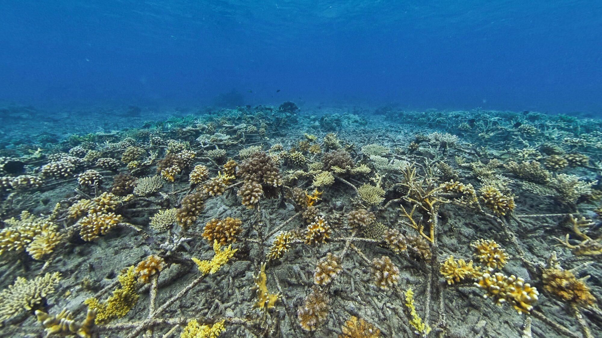 """""""SHEBA"""" เปิดตัว """"Hope Reef"""" โครงการฟื้นฟูปะการังใหญ่สุดในโลก"""