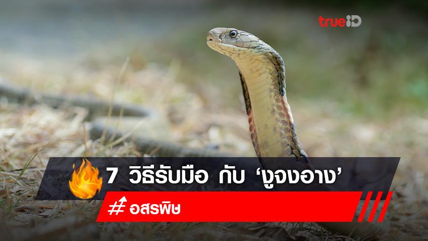 7 วิธี รับมือกับ 'งูจงอาง'