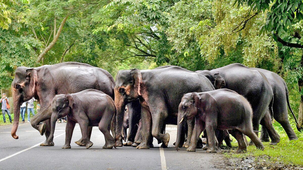 """อินเดีย """"สว็อบงวง-ล้วงก้นช้าง"""" 28 ตัว เร่งตรวจหาเชื้อ-หวั่นติดโควิด"""