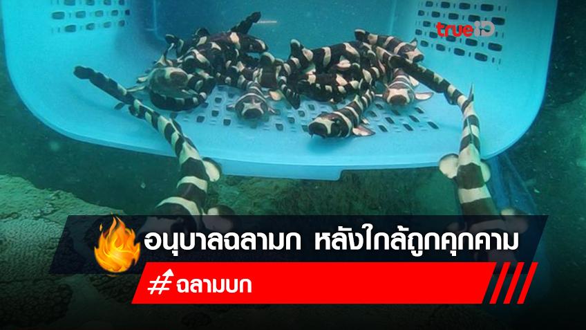 โครงการอนุบาลฉลามก คืนสู่อ่าวไทย