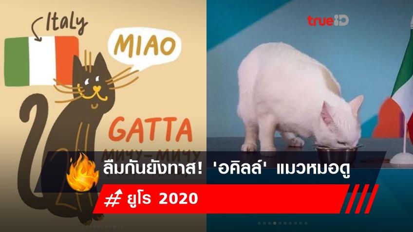 ลืมกันยังทาส! 'อคิลล์' แมวหมอดู หลังกลับมาทำหน้าที่ทายผลบอลยูโร 2020 อีกครั้ง