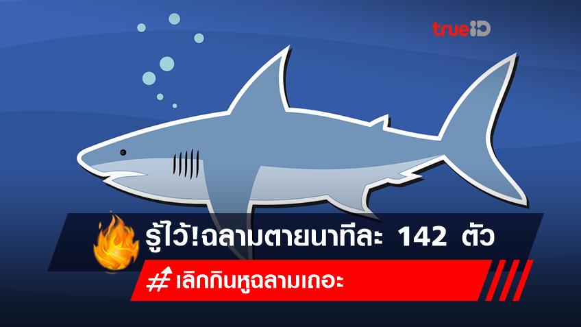 วิกฤตฉลามไทยก่อนตายหมดทะเล!