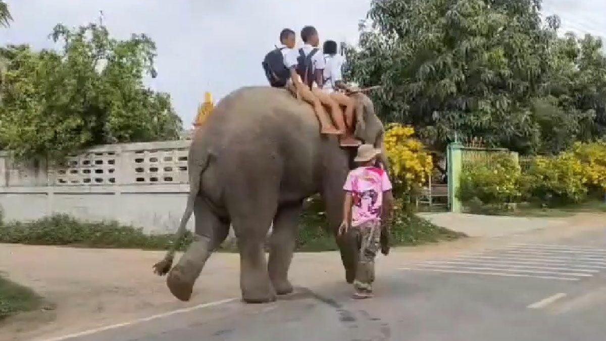 สีสันเปิดเทอมวันแรก ยุคโควิด ที่สุรินทร์ เด็กนักเรียน ขี่ช้างไปโรงเรียน