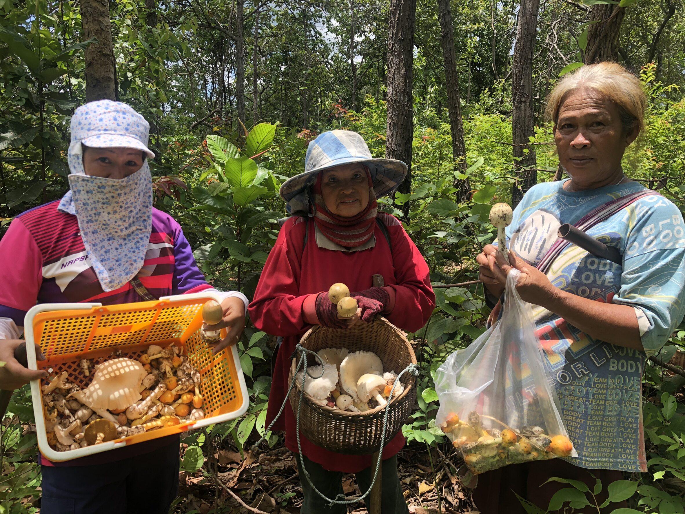 ฝนชุกตลาดเห็ดป่าคึกคัก  ทำเงินวันละครึ่งหมื่นสู้โควิด