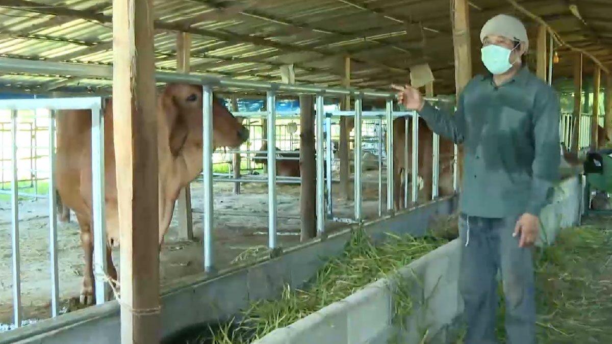 เจ้าของเศร้า วัวตัวละ 3.5 แสน ดับหลังติดเชื้อติดเชื้อลัมปี สกิน วอนรัฐเร่งฉีดวัคซีน