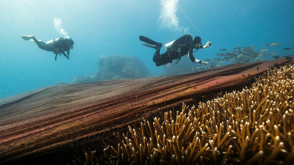 พบอวนขนาดใหญ่ปกคลุมปะการัง เกาะโลซิน บูรณาการร่วมแก้ปัญหา