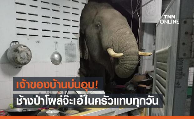 เจ้าของบ้านเพลีย! ช้างป่าโผล่จะเอ๋ค้นหาของกิน มาแทบทุกวัน