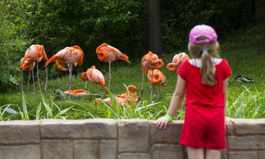 สวนสัตว์ในโตรอนโต เปิดประตูต้อนรับผู้เข้าชมอีกครั้ง