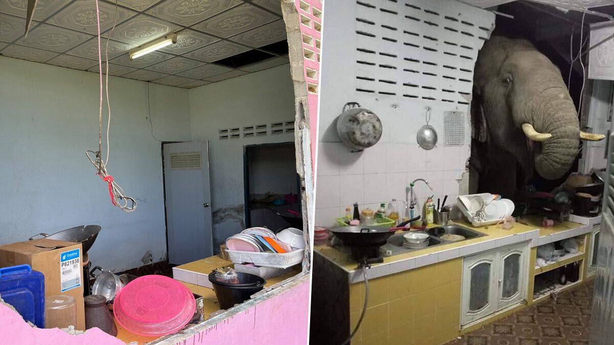 กรมอุทยานฯ เฉลยเหตุ ช้างบุกห้องครัว เผยชัดได้กลิ่นอาหาร ต้องการหาแร่ธาตุ