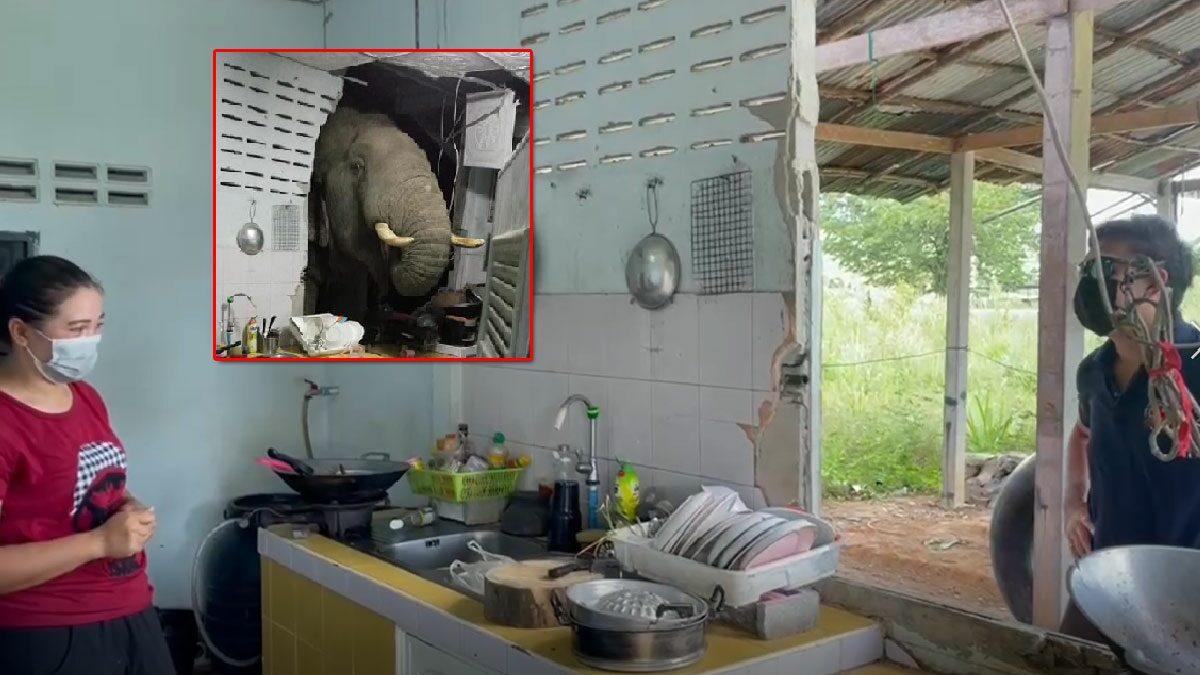 หมอล็อตเผยสาเหตุ ช้างบุกห้องครัว เจ้าของบ้านสุดเซ็ง เพิ่งจะซ่อมกำแพงบ้านไปไม่นาน