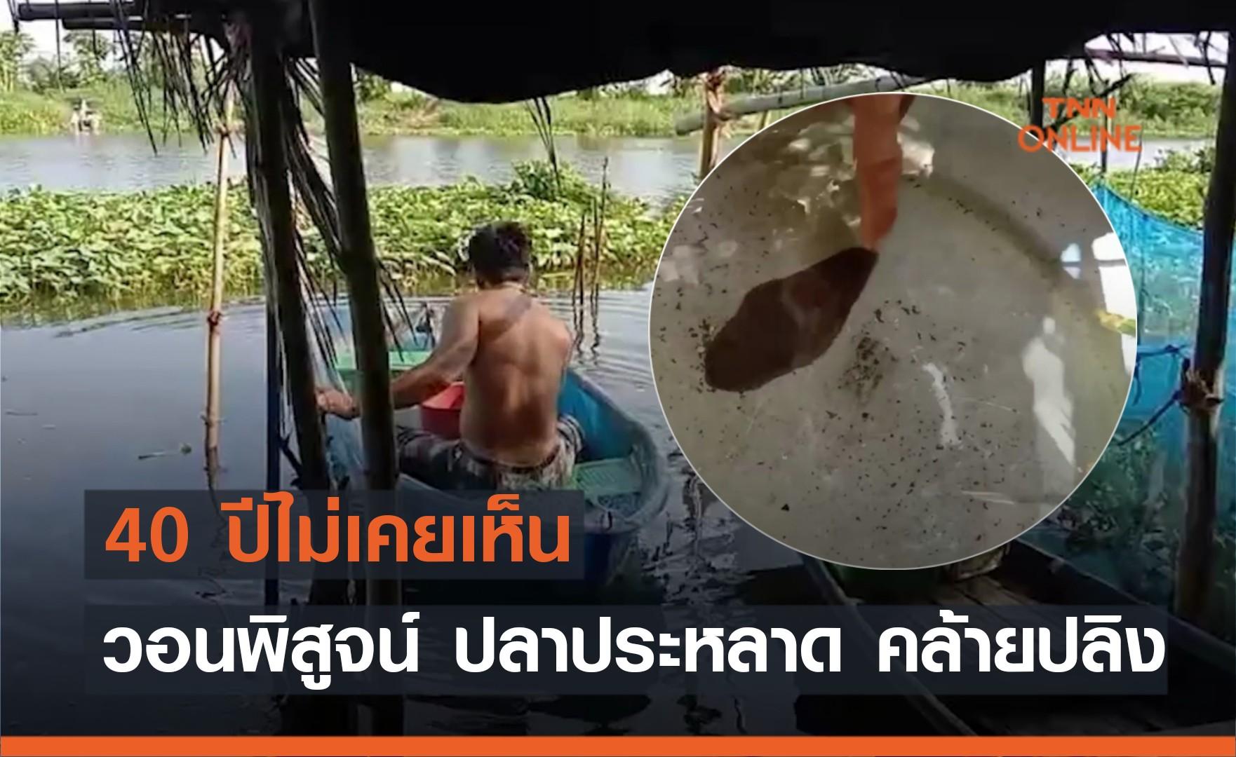 40 ปีไม่เคยพบ! ชาวบ้านวอนพิสูจน์ปลาประหลาดคล้ายปลิงแต่เป็นปลา