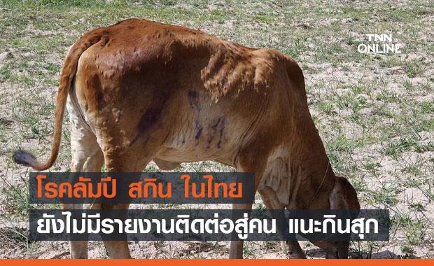 """สธ.เผย """"โรคลัมปี สกิน"""" ในไทย ยังไม่มีรายงานติดต่อสู่คน"""