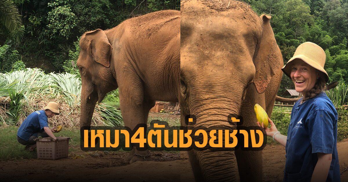 ช้างยิ้ม! บิ๊กบอสแสนสิริ ซื้อมะม่วง 4 ตันให้เป็นอาหาร