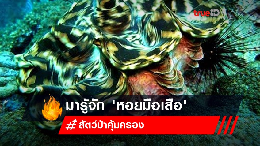 มารู้จัก 'หอยมือเสือ' (Giant clams) พร้อมบทลงโทษที่อาจลืมกันไปแล้ว