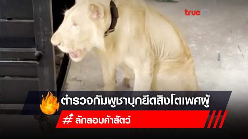 ตำรวจกัมพูชาบุกยึดสิงโตเพศผู้ ของชายชาวจีนที่ลักลอบนำเข้า