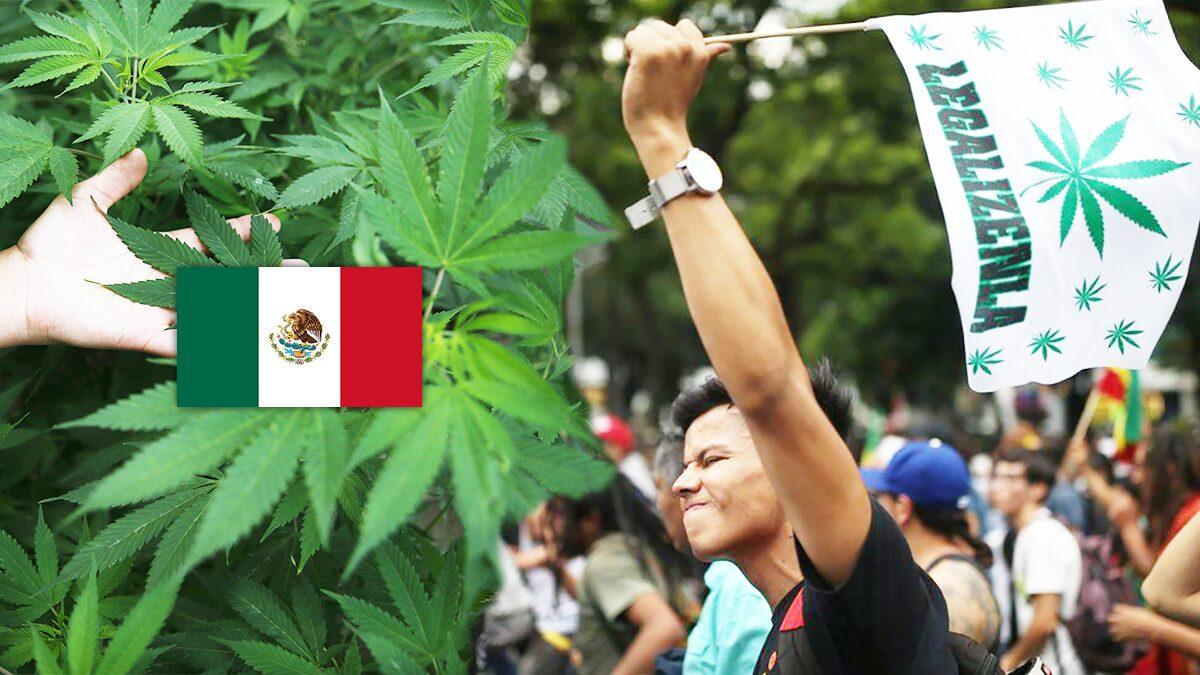 ศาลสูงสุดเม็กซิโกตัดสิน ใช้กัญชาเพื่อสันทนาการ ไม่ผิดกฎหมาย