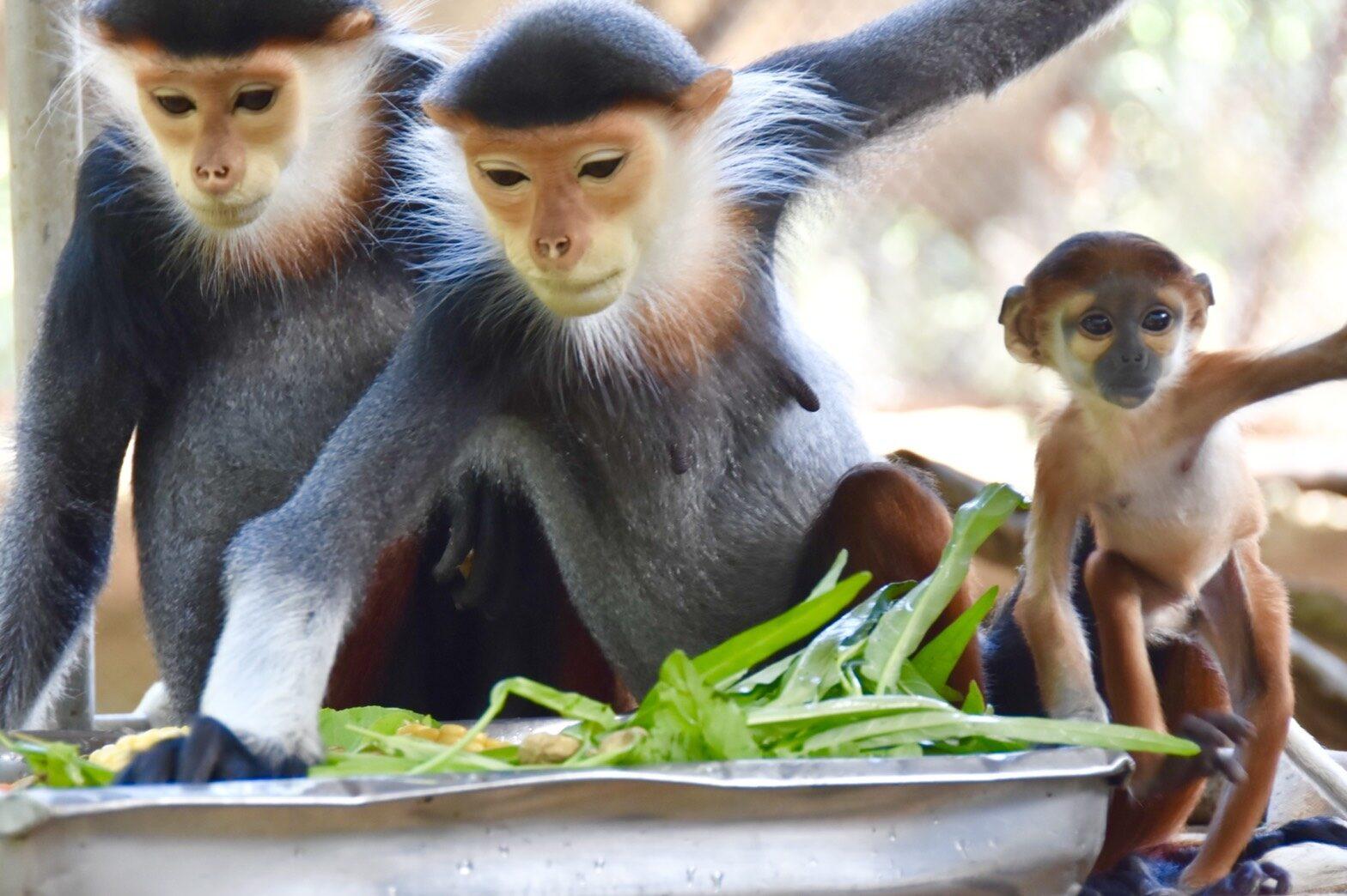 ปลื้ม! สวนสัตว์เปิดเขาเขียว ขยายพันธุ์สำเร็จ โชว์ลูกค่างห้าสี สัตว์ป่าใกล้สูญพันธุ์