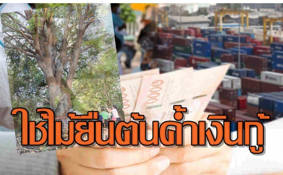 'ก.พาณิชย์'แนะเกษตรกรใช้ไม้ยืนต้นค้ำประกันเงินกู้ ลดหนี้นอกระบบ
