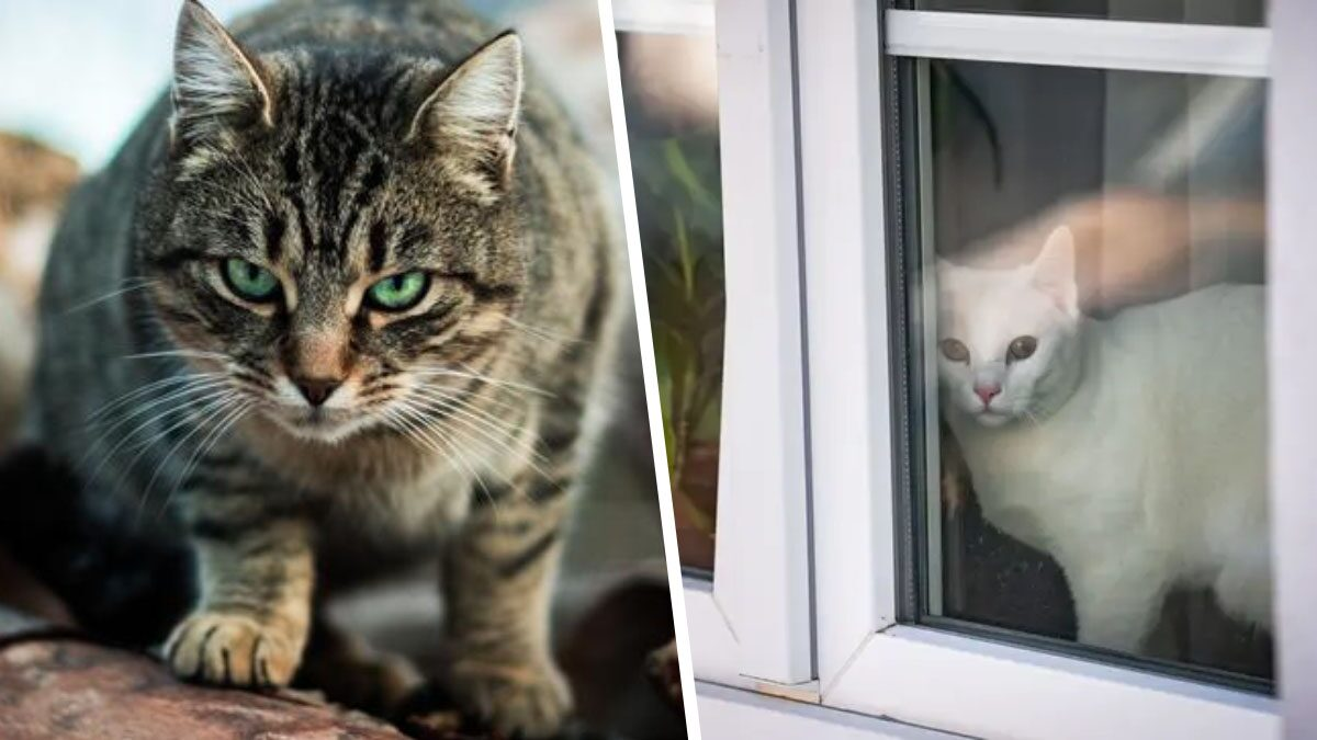 สภาเมืองออสซี่ สั่งเคอร์ฟิว 'แมว' 24 ชั่วโมง ห้ามออกนอกบ้าน เหตุล่าสัตว์เยอะเกิน