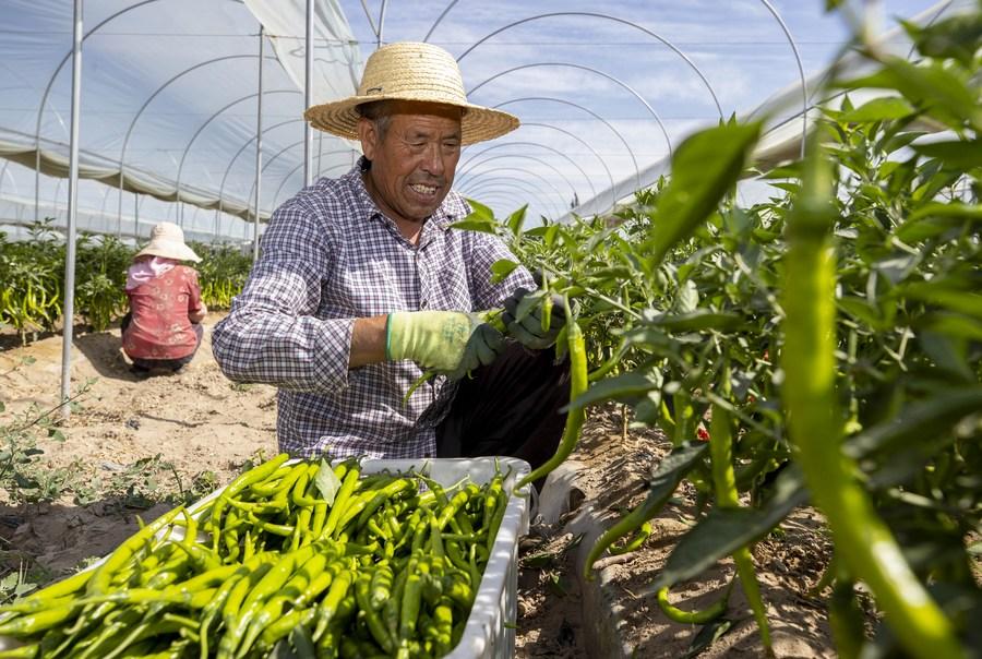 'หนิงเซี่ย' ดันเกษตรยุคใหม่ สร้างรายได้ชาวบ้านท้องถิ่น
