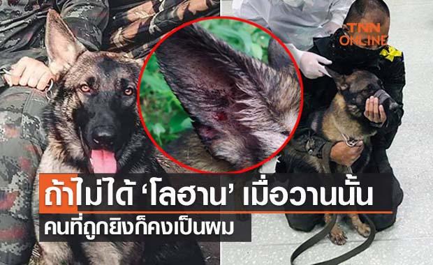 ชาวเน็ตยกย่อง 'เจ้าโลฮาน' สุนัขทหารรับกระสุนผู้ก่อการร้าย 3จว.ใต้บาดเจ็บ