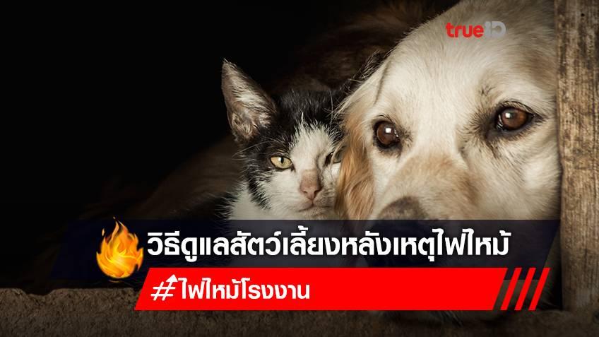 วิธีเช็กอาการสัตว์เลี้ยง น้องหมา-น้องแมว หลังเกิดเหตุไฟไหม้