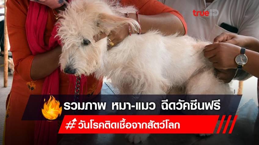 Photo Gallery: 'น้องหมา-แมวในอินเดีย เข้ารับวัคซีนฟรี ในวันโรคติดเชื้อจากสัตว์โลก'