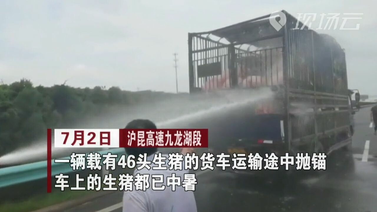 กู้ภัยจีนฉีดน้ำดับร้อน 'หมู' กลางทางด่วน