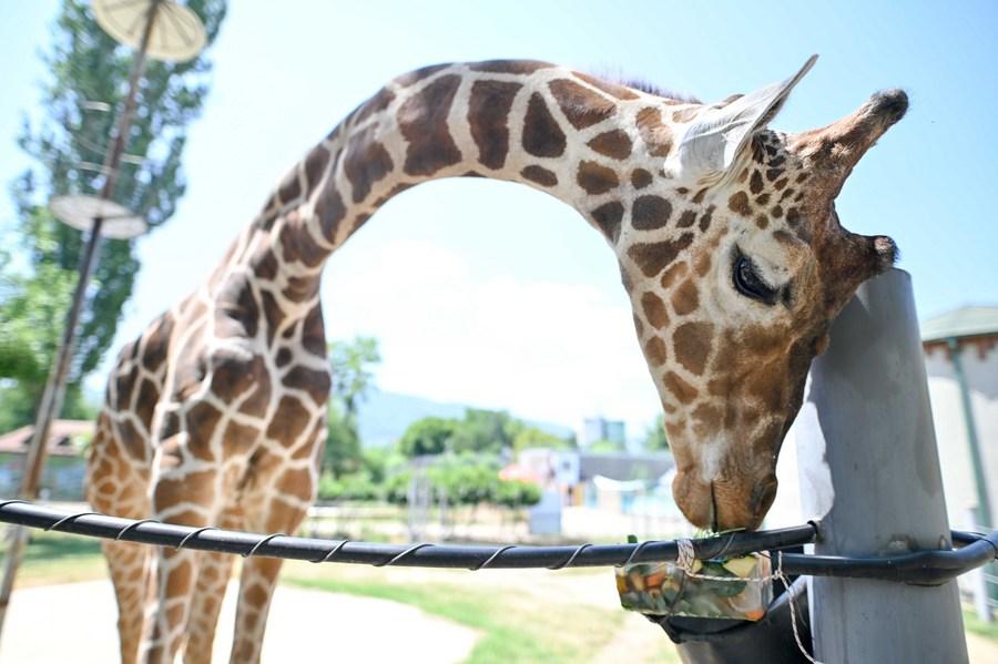 สวนสัตว์ 'มาซิโดเนียเหนือ' จัดอาหารแช่แข็งดับร้อน