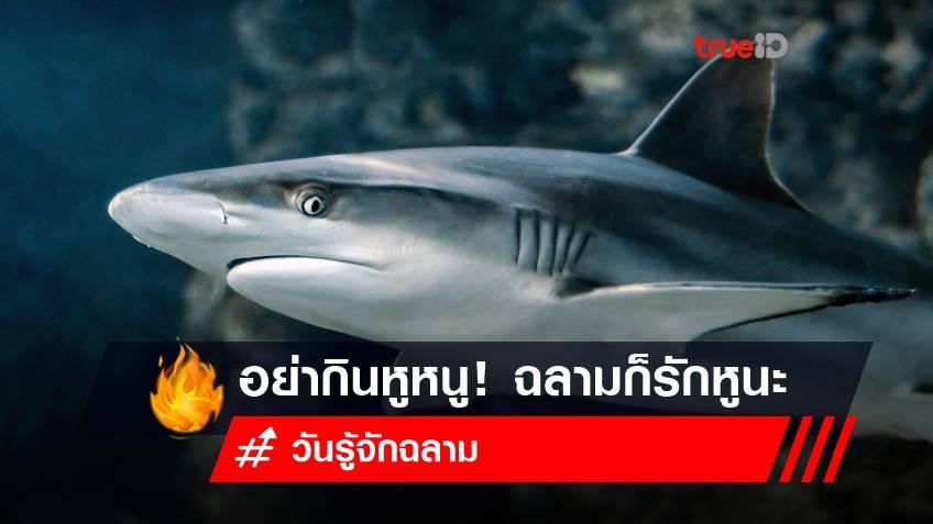 14 กรกฎาคม วันรู้จักฉลาม : อย่ากินหูหนู! หูฉลามต้องอยู่กับฉลาม