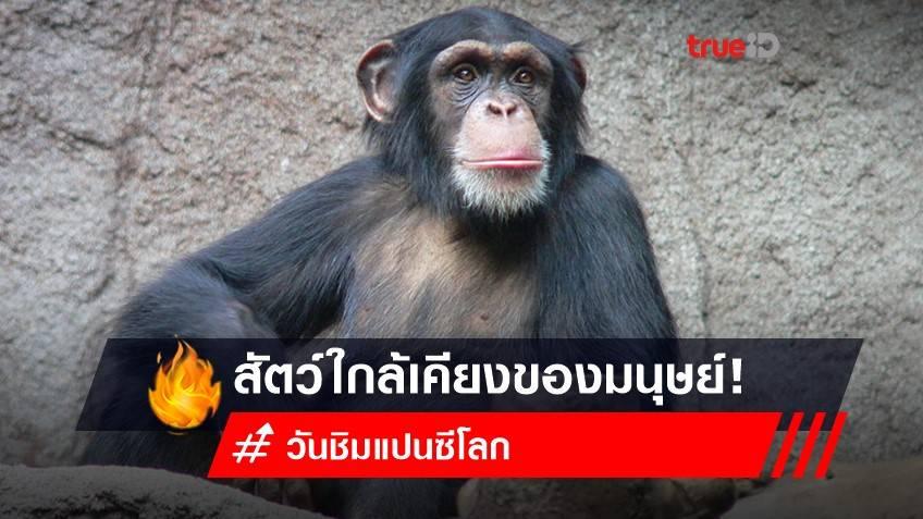 14 กรกฎาคม วันชิมแปนซีโลก (World Chimpanzee Day) : สัตว์ใกล้เคียงของมนุษย์