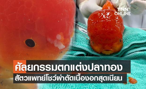 สัตวแพทย์ โชว์ผ่าตัดศัลยกรรมเนื้องอกปลาทองสุดเนียน